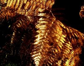 feuilles-dor